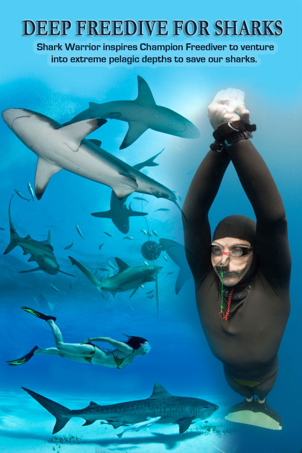 freediving-for-sharks