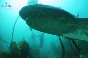 deep-freedive-for-sharks