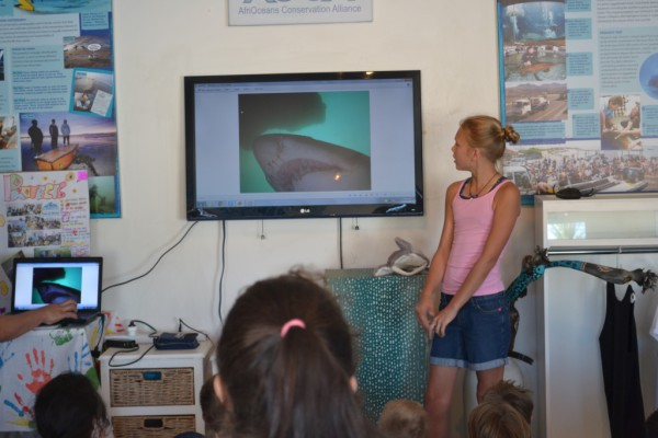 Shark Girl Cameron Strachan